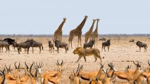 Animals dream interpretation answers
