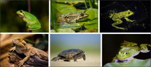 amphibians dream interpretation answers