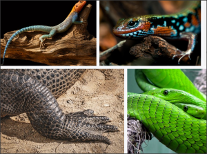 snake dream interpretation answers